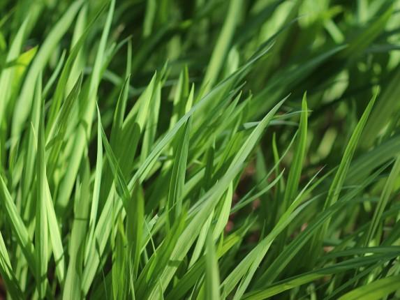 grass - 1