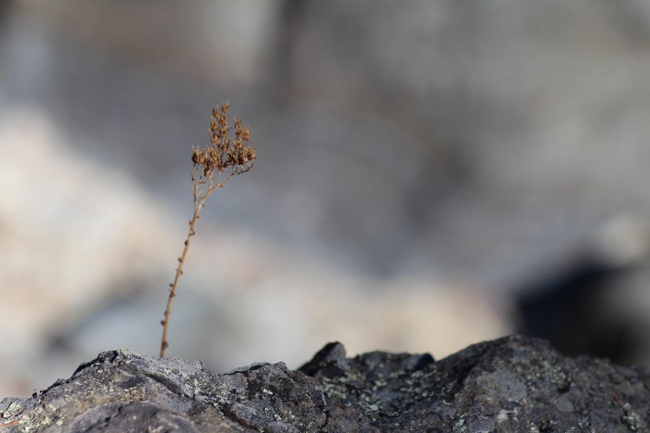 rock-ridge - 1
